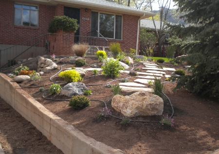 xeriscape-in-progress